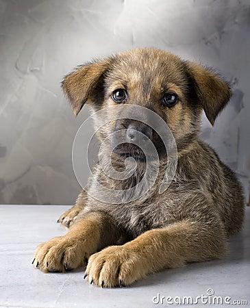 Free Puppy Stock Image - 14840761