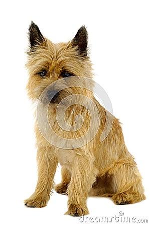 Free Puppy Stock Photos - 18654473