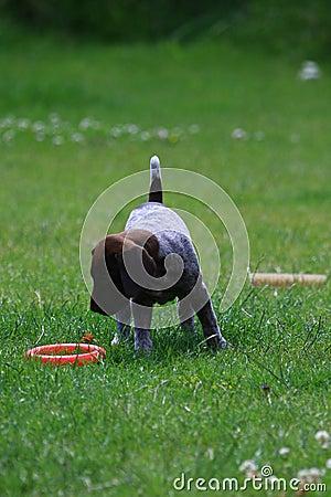 Free Puppy Stock Photos - 5557093