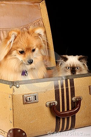Free Puppy And Kitten In Suitcase Royalty Free Stock Photography - 5068387