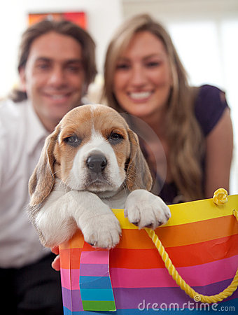Puppy as a gift
