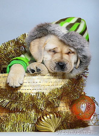 Puppy In A Basket With Christmas Ornaments. Stock Image - Image: 11775691