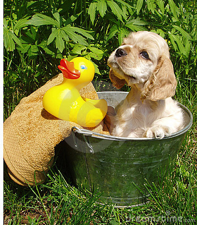 Free Puppy Bath Time Royalty Free Stock Images - 843659