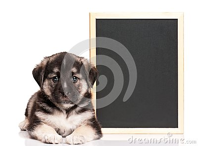 Puppy with blackboard