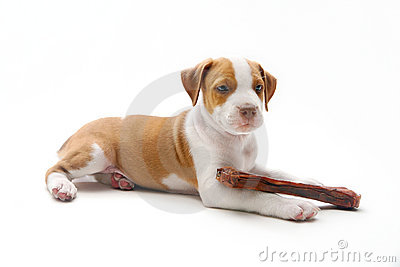 Puppy and bone