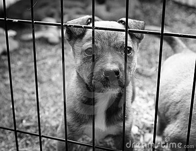 Puppy In A Cage Royalty Free Stock Photo Image 16776645