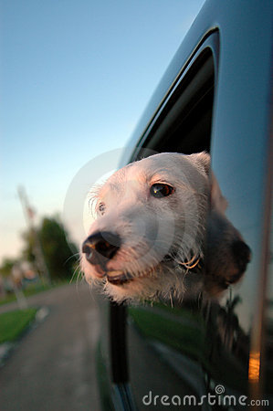 Free Puppy Car Ride Royalty Free Stock Images - 1219479