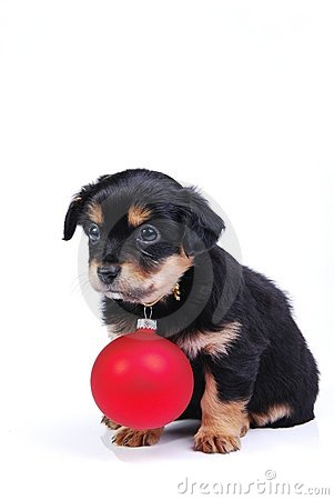Puppy with Christmas ball