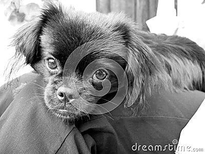 Puppy Dog Stock Photo