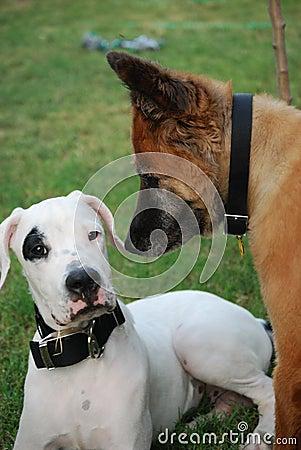 Free Puppy Dog Stock Image - 6212811