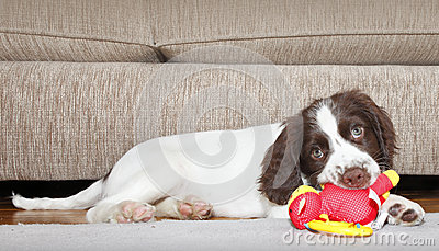Puppy dog biting toy