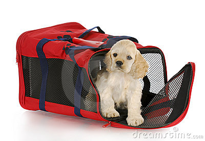 Puppy in a dog crate bag