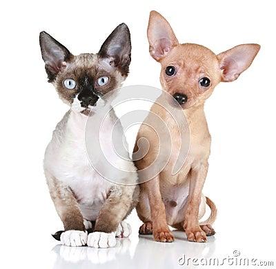 Puppy dog and Devon rex cat on a white background