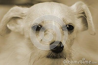 Puppy dog eye s