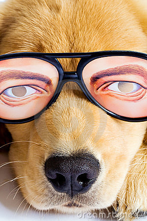 Puppy Dog with funny glasses