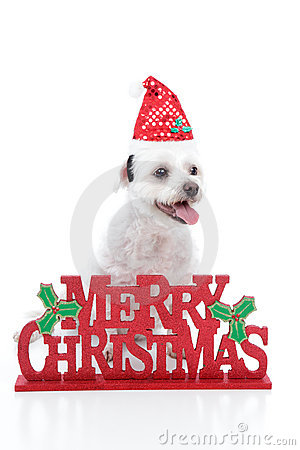 Puppy dog and Merry Christmas sign