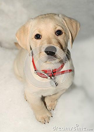 Puppy dog in snow