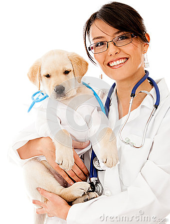 Puppy Dog At The Vet Stock Photos - Image: 26707673 Relaxing Dog Music Audio