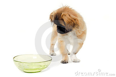 Puppy dog and water bowl