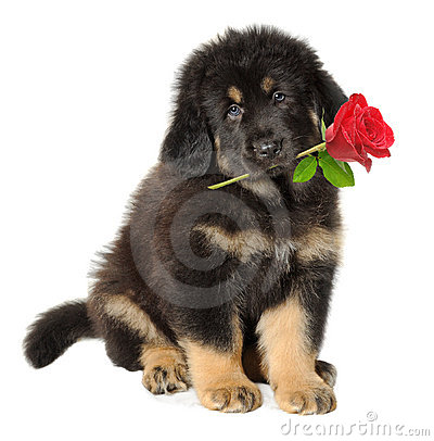 Free Puppy Dog With Flower Royalty Free Stock Photo - 17285895