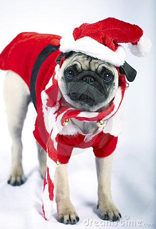 Puppy dressed like Santa Claus