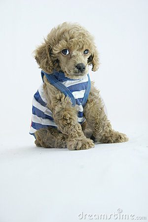 Puppy fashion