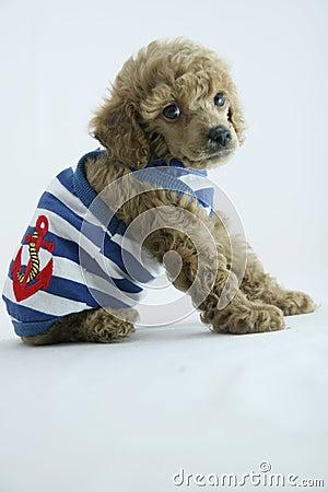 Puppy fashion