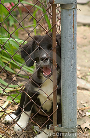 Puppy at the fence