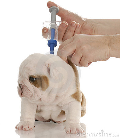 Free Puppy Getting Vaccinated Stock Photos - 11919333