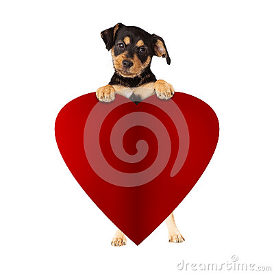 Free Puppy Holding Blank Valentines Paper Heart Royalty Free Stock Image - 84974196