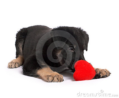 puppy holds heart in paws