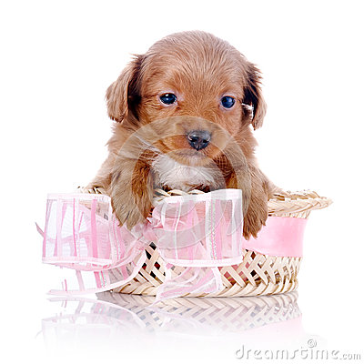 Free Puppy In A Wattled Basket With A Pink Bow. Stock Photos - 37761163