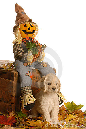 Free Puppy In Halloween Scene Royalty Free Stock Photo - 6944575