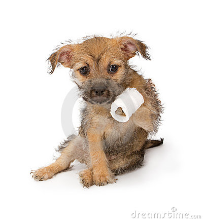 Puppy With An Injured Paw Stock Photography - Image: 23265912
