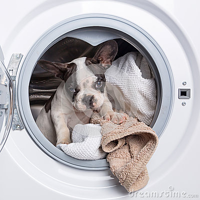 Puppy inside the washing machine