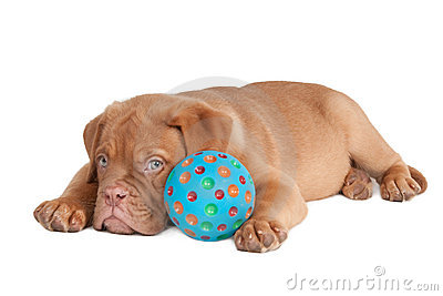 Puppy and its ball