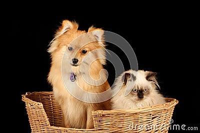 Puppy and Kitten in Basket