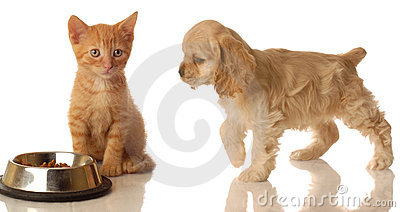 Puppy and kitten with food