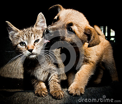 Puppy kitty love and kiss
