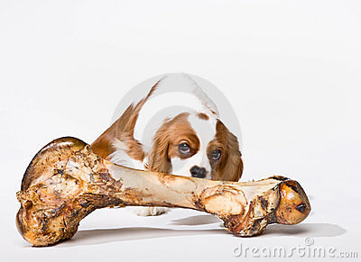 Puppy with large bone
