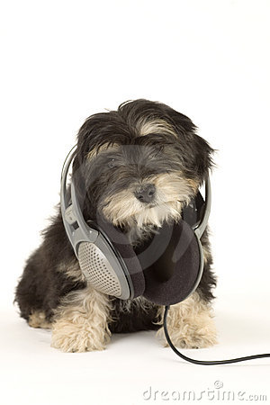 Puppy listening to music with headphones