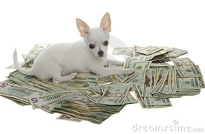 Puppy Lying in Pile of Twenty Dollar Bills