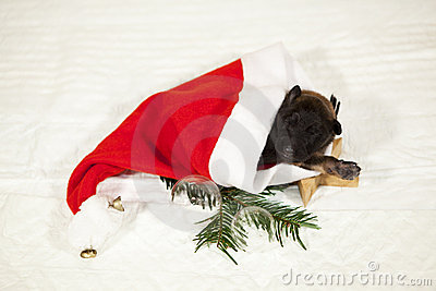 Puppy lying in a Santa Claus hat