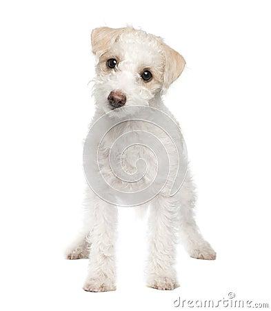 Puppy Mixed-Breed Dog