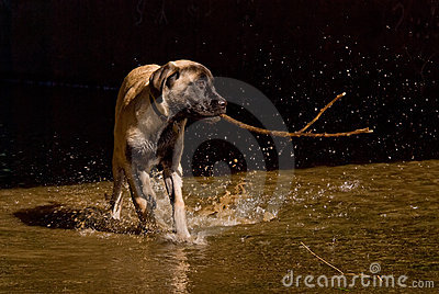 Puppy play in water