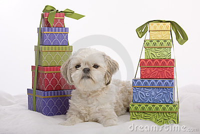 Puppy among presents