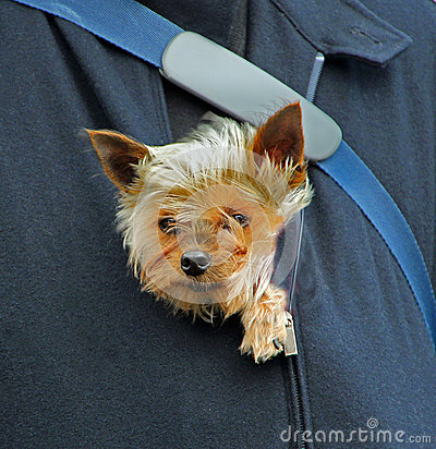 Free Puppy Protection Stock Photos - 63451083