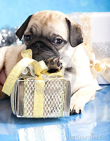 Puppy pug and gifts