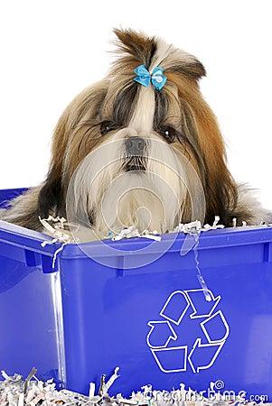 Puppy in recycle bin