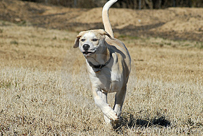 Puppy running in field